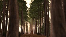 r__s13__c12_pineforest__-0011